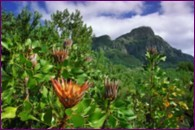 Kirstenbosch, South Africa